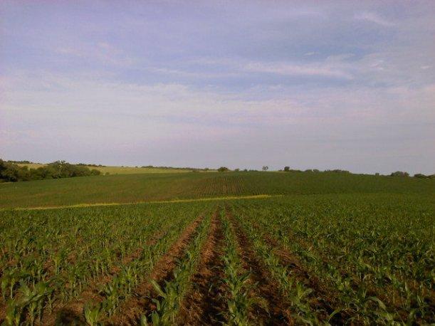 Dryland NE Seward County