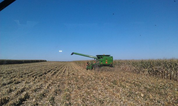 Feedlot Corn 2013