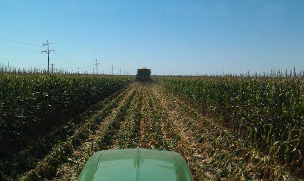 High Moisture FeedLot Corn