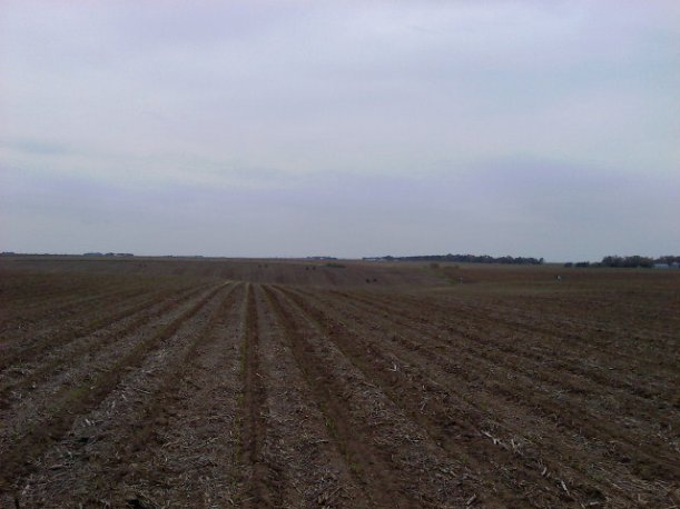 Hilly Irr Corn field-Spiking