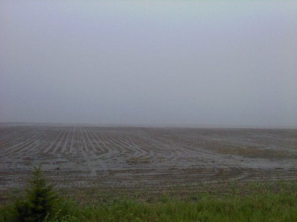Seed Corn field in Pouring Rain