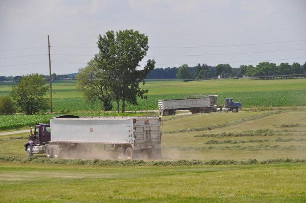 Alfalfa Chopping 002