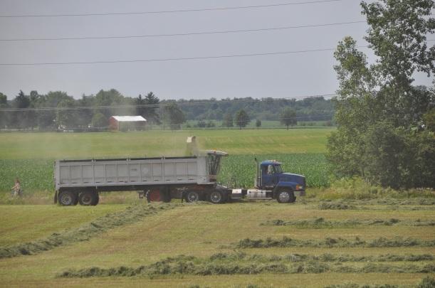 Alfalfa Chopping 003