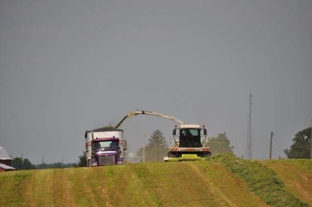 Alfalfa Chopping 004