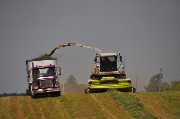 Alfalfa Chopping 008
