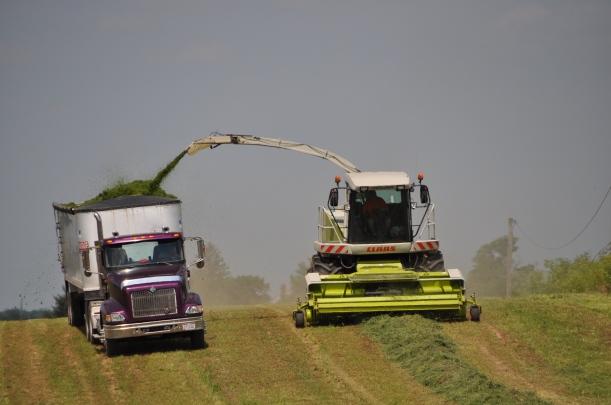 Alfalfa Chopping 009