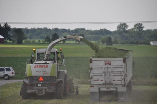 Alfalfa Chopping 011
