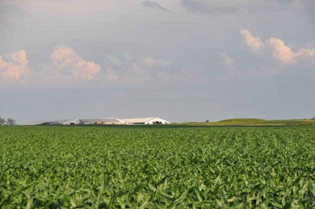 Farm Pictures 06 18 13 003 - Corn