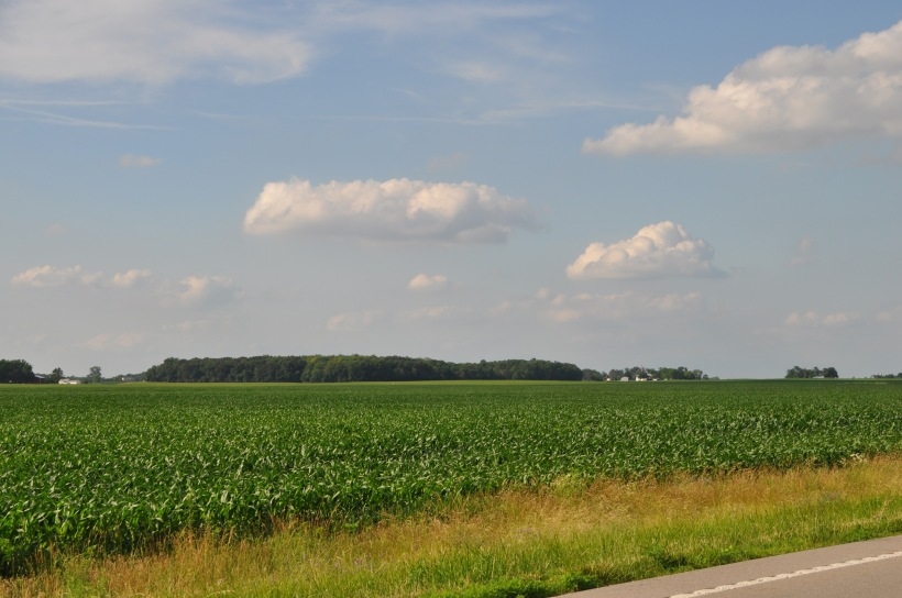 Farm Pictures 06 18 13 011 - Corn