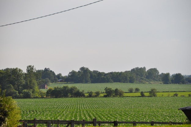 Farm Pictures 06 18 13 025 - Corn