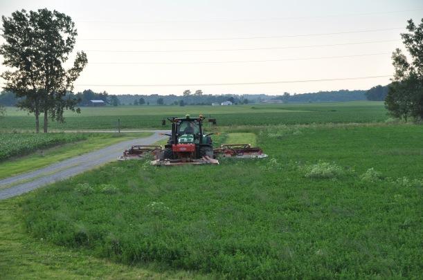 Farm Pictures 06 18 13 033 - Alfala