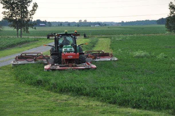 Farm Pictures 06 18 13 034 - Alfalfa