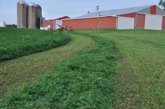 Farm Pictures 06 18 13 049 - Alfalfa