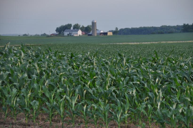 Farm Pictures 06 18 13 050 - Corn
