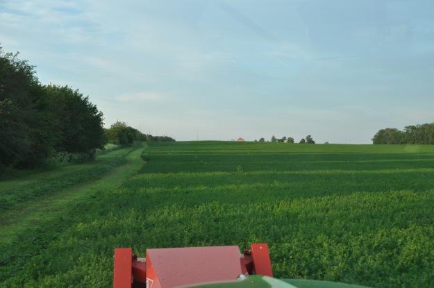 Farm Pictures 06 18 13 060 - Alfalfa