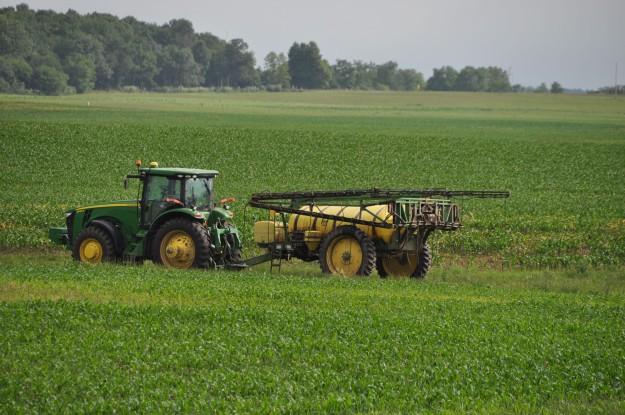 Growing Corn 027