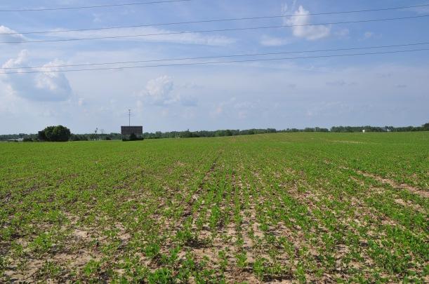 Soybeans 6 17 13 014