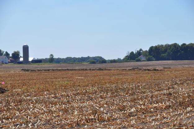 Harvest 2013 - 09 04 13 006