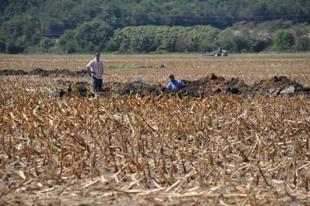 Harvest 2013 - 09 04 13 023
