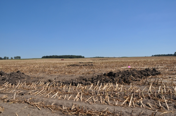 Harvest 2013 - 09 04 13 048