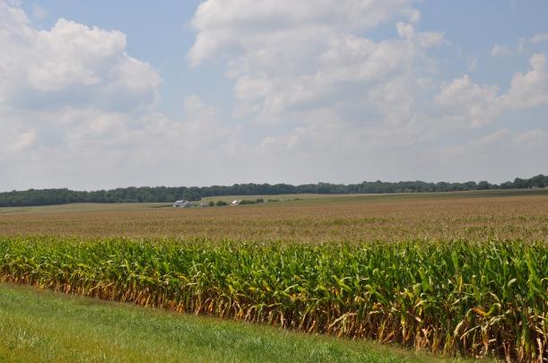Harvest 2013 119
