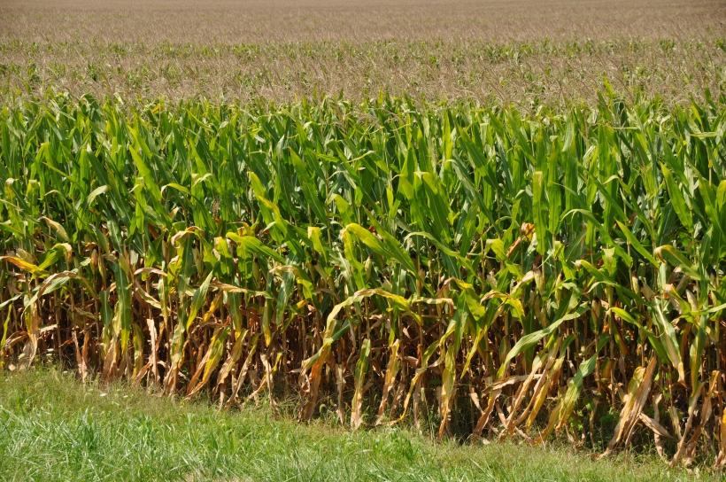 Harvest 2013 120