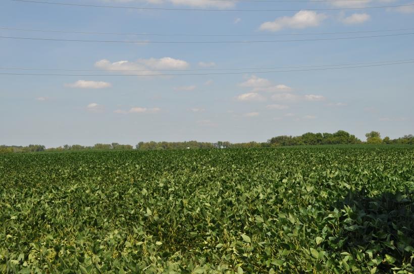 Harvest 2013 162