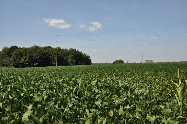 Harvest 2013 163