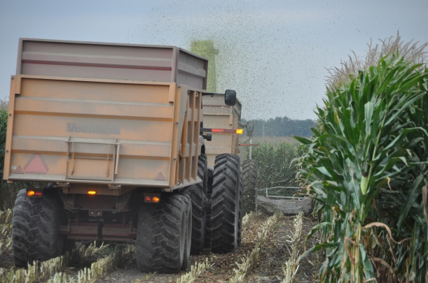 Harvest 2013 202