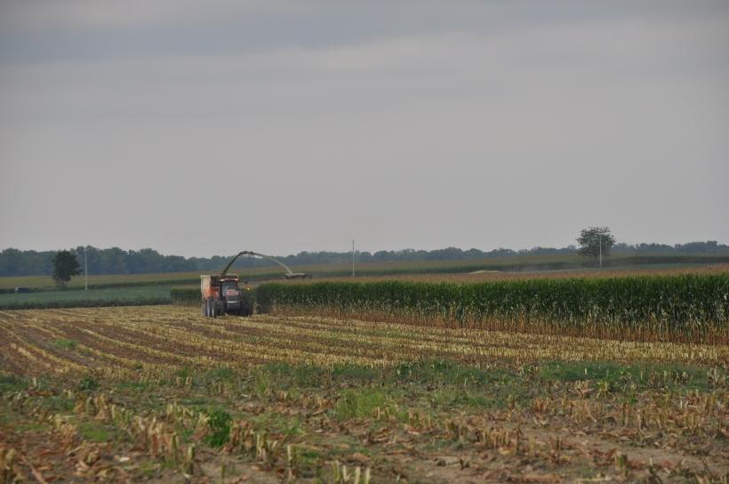 Harvest 2013 214