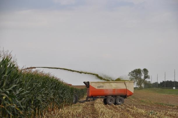 Harvest 2013 237