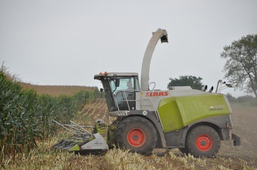 Harvest 2013 244