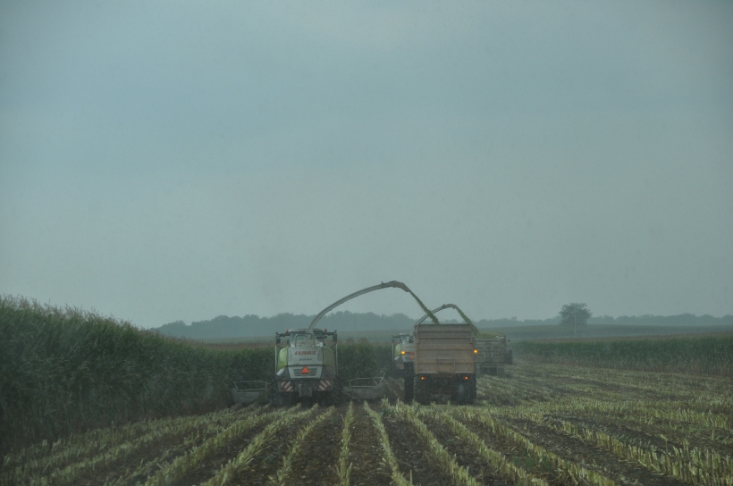 Harvest 2013 246