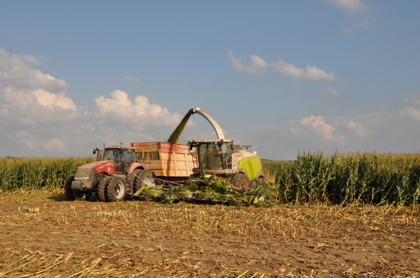 Harvest 2013 - Chopping 008