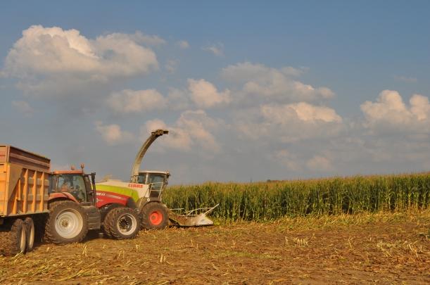 Harvest 2013 - Chopping 011