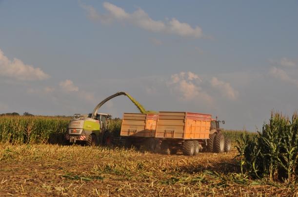 Harvest 2013 - Chopping 013