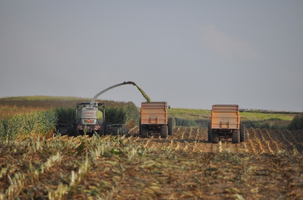 Harvest 2013 - Chopping 019