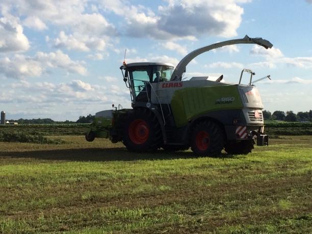 Alfalfa cutting 07 03 14 - 1