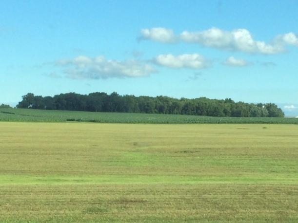 Alfalfa cutting 07 03 14 - 12