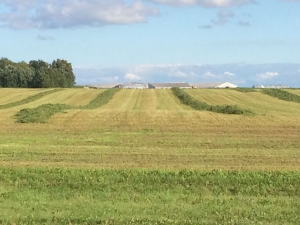 Alfalfa cutting 07 03 14 - 13