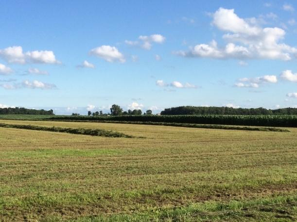 Alfalfa cutting 07 03 14 - 14