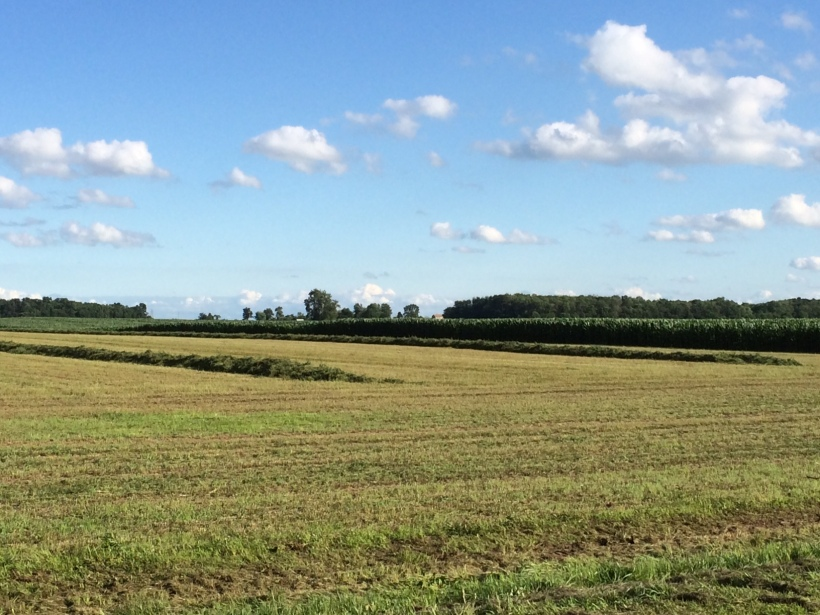 Alfalfa cutting 07 03 14 - 14