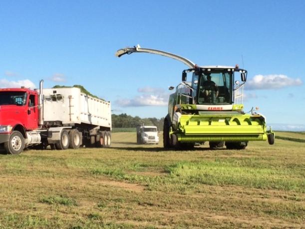 Alfalfa cutting 07 03 14 - 4