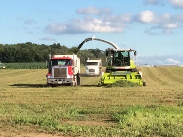 Alfalfa cutting 07 03 14 - 6