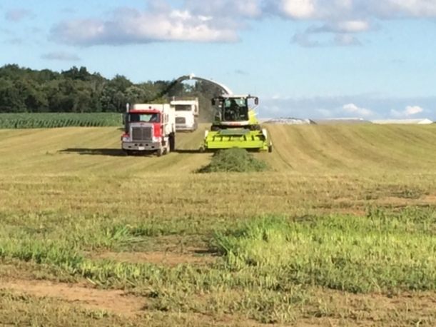 Alfalfa cutting 07 03 14 - 7