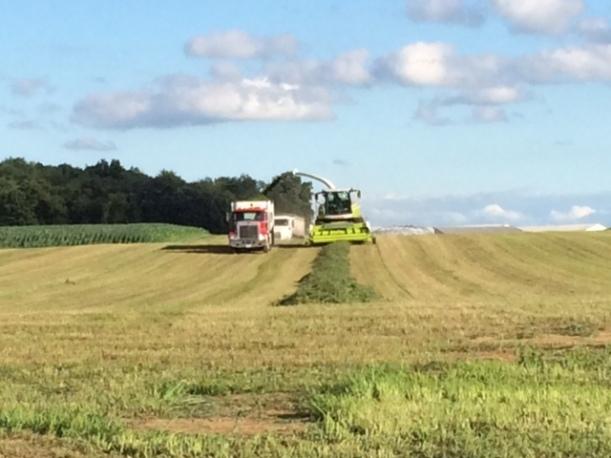 Alfalfa cutting 07 03 14 - 8